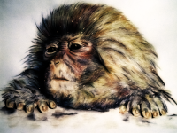 Snow Monkey, monkeyswithbrushes